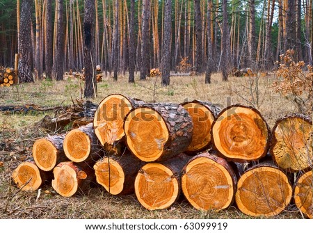 pile of logs in a forest - stock photo