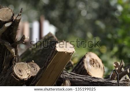 pile of logs near my house - stock photo