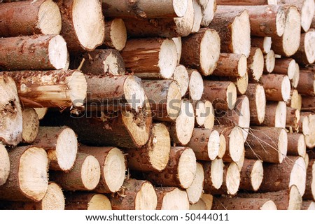 Pile of logs of wooden trees in forest - stock photo