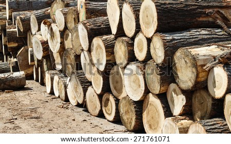 Pile of logs sorted in sawmill yard ready as resorce - stock photo