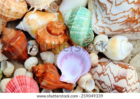 pile of many color shells on the sand in soft focus - stock photo