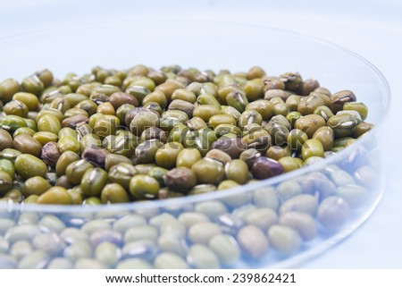 Pile of mung bean on white background - stock photo