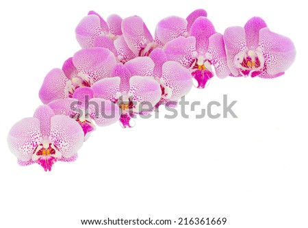 pile of pink  orchid  flowers   isolated on white background