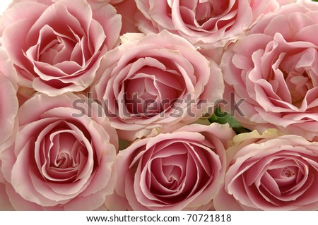 Pile of pink rose blossoms background - stock photo