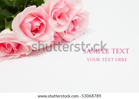 Pile of pink rose blossoms on white background - stock photo