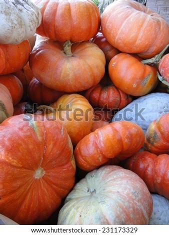 Pile of Pumpkins - stock photo