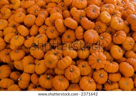 Pile of Pumpkins - stock photo