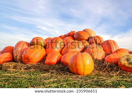 Pile of pumpkins on straw under a blue sky
