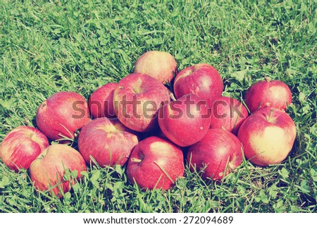 Pile of ripe red apples on the grass, on a sunny summer afternoon. Image filtered in faded, washed-out, retro style; rural vintage concept. - stock photo