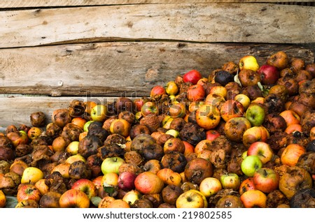 pile of rotten apples on wooden boards background - stock photo