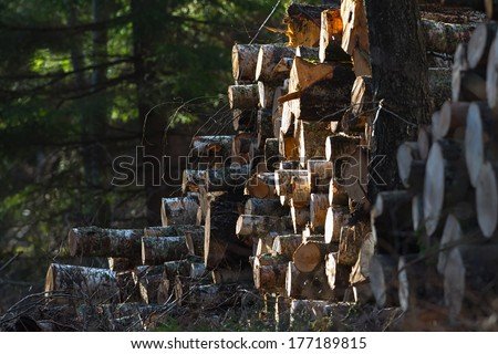 Pile of timber in the woods at a clearcut during spring - stock photo