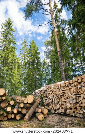 Pile of timber logs against tall trees in forest - stock photo