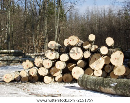 Pile of timber with number of pile in the forest, prepared to shipment