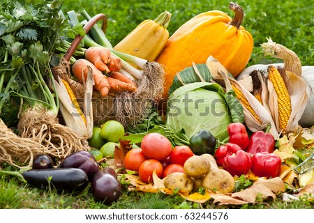 Pile of various raw fresh vegetables outdoor in grass