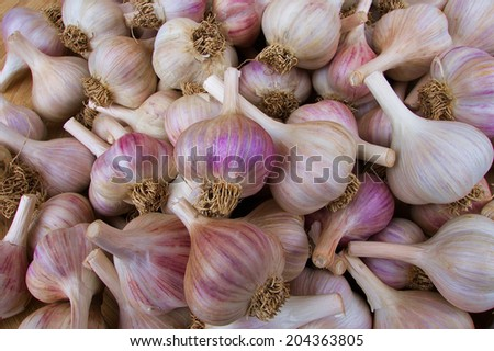 Pile of white and purple garlic at the farmers market - stock photo