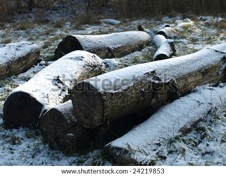 Pile of wood in a snowy landscape