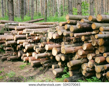 Pile of wood in the forest - stock photo