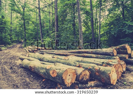 Pile of wood in the forest by the road, vintage photo. - stock photo