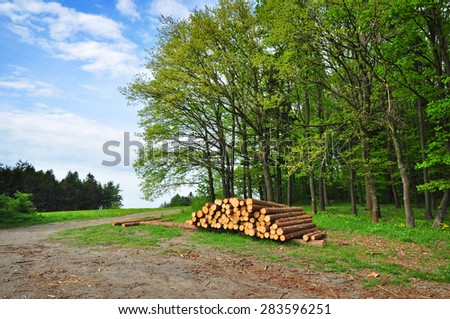 Pile of wood logs by forest, forestry. - stock photo
