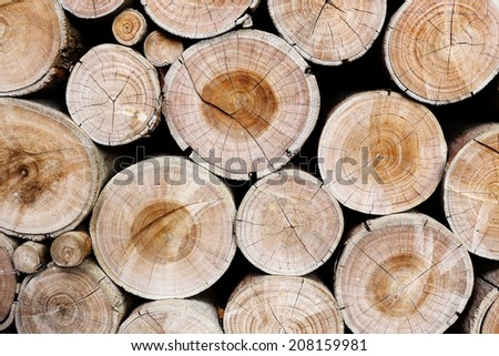 Pile of wood logs ready for industry - stock photo