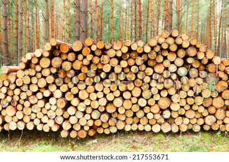 Pile of wooden logs in pine forest. - stock photo