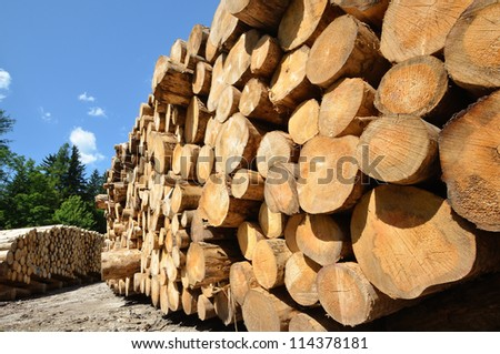 pile of wooden logs under blue sky - stock photo