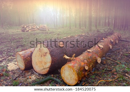 pile wood trunks - stock photo