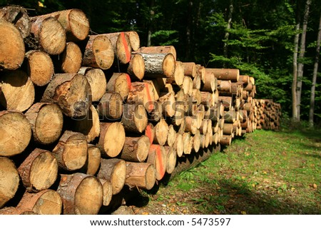pile wood, wood texture, firewood, background forest - stock photo