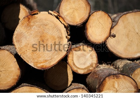 Piled cut tree trunks for timber trade on a sunny day, close-up background - stock photo
