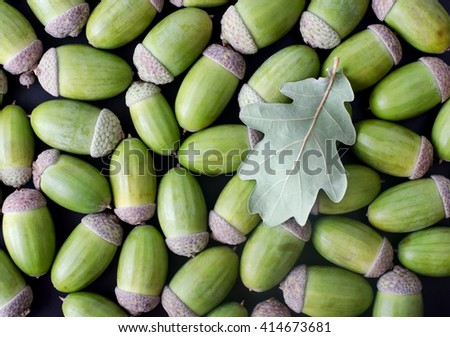 Piled heap of green acorns and oak leaf - stock photo
