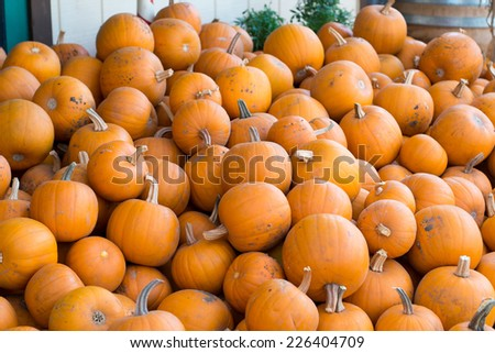Piled pumpkin with barrel at the side. - stock photo