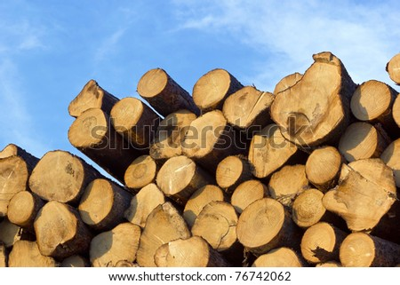 piled tree trunks - stock photo