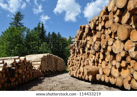 piles of wooden logs under blue sky - stock photo