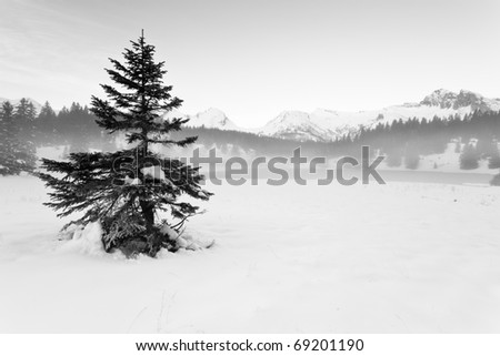 Pine alone in the snow - stock photo