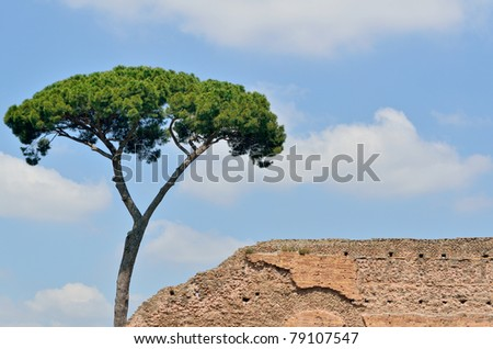 Pine and ancient brick wall against the blue sky - stock photo