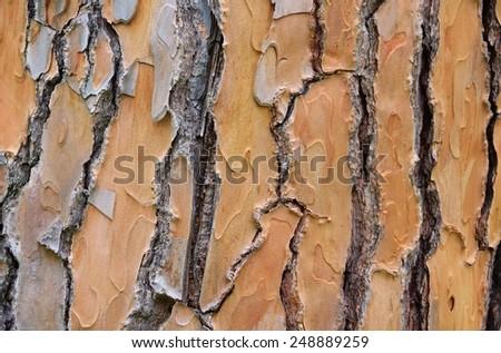 pine bark 03 - stock photo