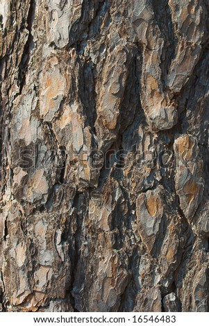 Pine bark close up - stock photo
