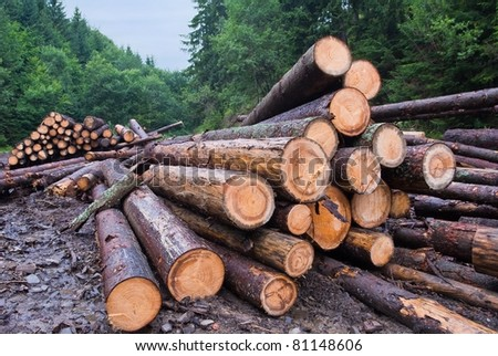 pine barrels in a forest - stock photo