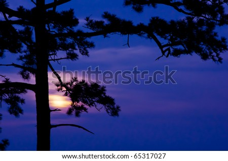 Pine branch against the background sunrise - stock photo