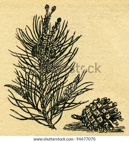 """pine branch - an illustration from the book """"In the wake of Robinson Crusoe"""", Moscow, USSR, 1946. Artist Petr Pastukhov - stock photo"""