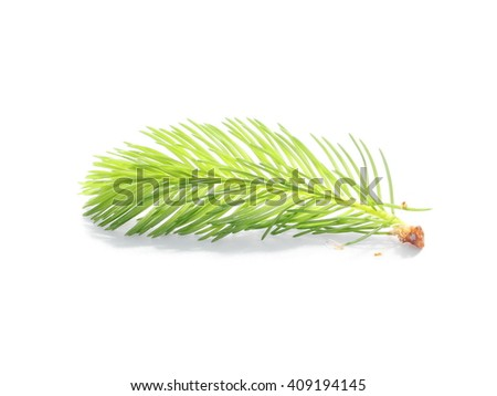 pine branch isolated on white background - stock photo