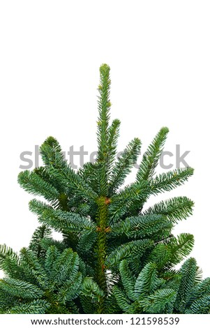 Pine branches isolated on white background - stock photo