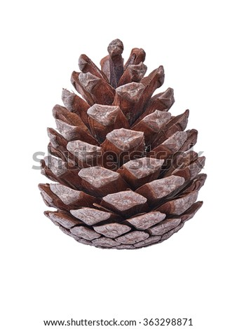 Pine cone brown closeup on a white background  - stock photo