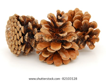 Pine cone flowers - stock photo