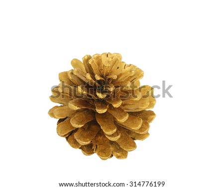 Pine cone isolated on white background with clipping path  - stock photo