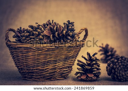 pine cone on a brown background