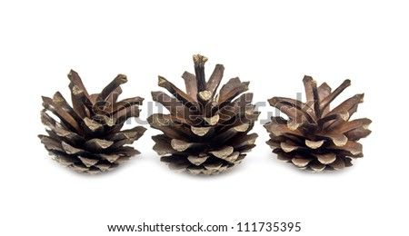 pine cone on a white background