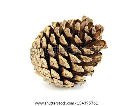 Pine cone on a white background - stock photo