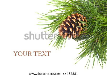 Pine cone on branch on the white background