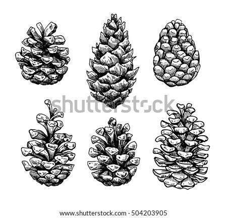 Pine Cone Illustration Pinecone Stock Images,...